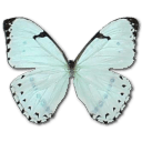 Mint Morpho Sticker