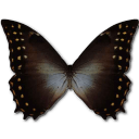 Morpho Amphitrion Sticker