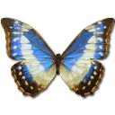 Morpho Cypress Cyanides Female Sticker