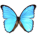 Morpho Didius Sticker