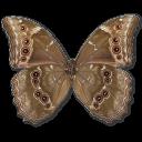 Morpho Didius Underside Sticker