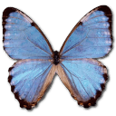 Morpho Partis Thamyris Sticker