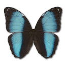 Morpho Patroclus Orestes Male Sticker