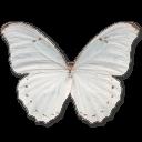 Morpho Polyphemus Sticker
