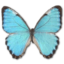 Morpho Portis Male Sticker