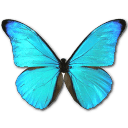 Morpho Rhetenor Cacica Sticker