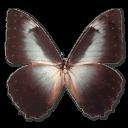 Morpho Telemachus Sticker