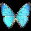 Morpho Zephyritis Male Sticker