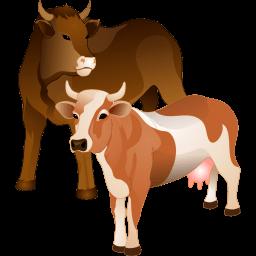 Cattle Sticker