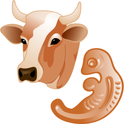 Cow Embryo Sticker