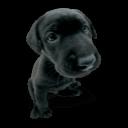 Puppy 2 Sticker