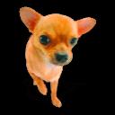 Puppy 3 Sticker