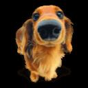 Puppy 4 Sticker