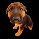 Puppy 6 Sticker
