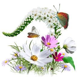 Flowers Wildflowers Sticker
