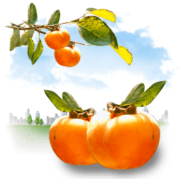 Fruits Persimmon Sticker
