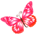 Butterfly Pink Sticker