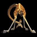 Madagascar Melman Sticker