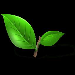 Tea Plant Leaf Sticker