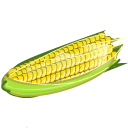 Corn Sticker