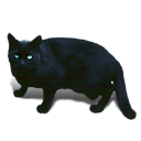 Black Cat Green Eyes Sticker