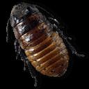 Caca Roach Sticker